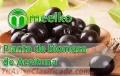 Planta de biomasa de Aceituna