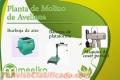 Meelko Planta de Molino de Avellana